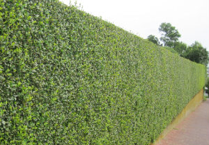 hedge-cutting-maintenance-palmers-green